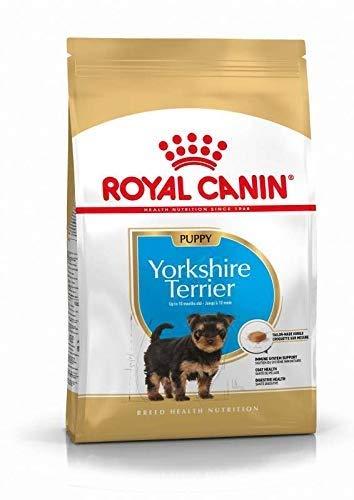 Royal Canin 35118 Breed Yorkshire Terrier Junior/puppy 1,5 kg - Hundefutter, Verpackung kann variieren (Yorkshire Welpen)