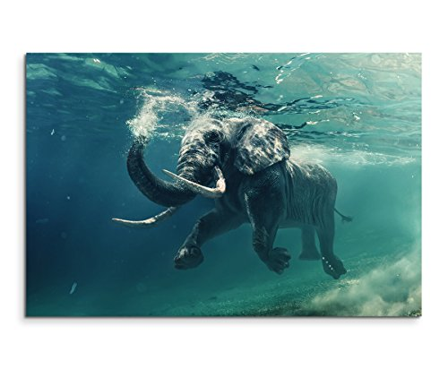 Sinus Art Wandbild 120x80cm Tierfotografie - Schwimmender Elefant unter Wasser