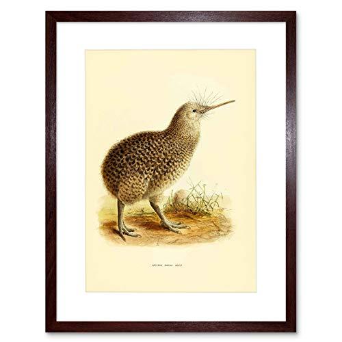 DRAWING BIRD ROWLEY KEULEMANS LITTLE SPOTTED KIWI FRAMED ART PRINT B12X12744 - Spotted Bird