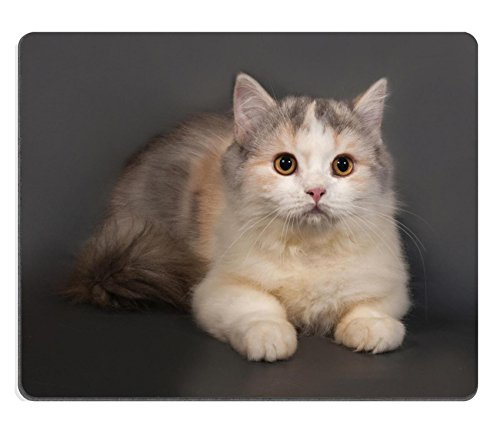 msd-mousepad-de-goma-natural-imagen-id-35151466-tailandes-gato-con-ojos-azules-tumbado-sobre-fondo-m