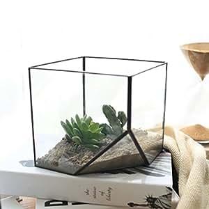 Vetro Terrario Cubo Fata Giardino Di Casa Formato Serra L