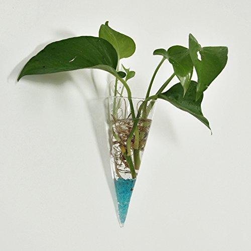 pared-de-vidrio-cono-claro-flor-colgando-decoracion-botella-planta-de-maceta-en-casa
