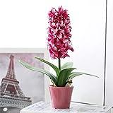 XMDNYE 1 Set Topfpflanzen Künstliche Hyazinthe Keramik Vase Seide violett Blume Bonsai Blatt Hochzeit Garten Dekor Home Tisch Zubehör