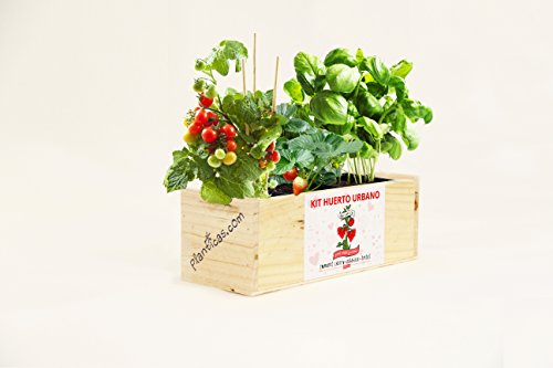 kit-de-huerto-urbano-para-enamorados-tomates-cherry-albahaca-y-fresas