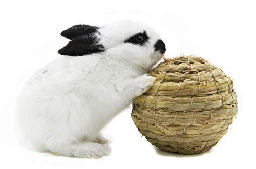 Zeagro Set mit 2 geflochtenen Grasbällen mit Glocke für Kaninchen, Holländisches Schweinchen, Meerschweinchen, Totoro Haustier Spielzeug Schleifwerkzeuge