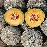 Premier Seeds Direct MEL03 - Semillas para verduras (melón cantalupo)