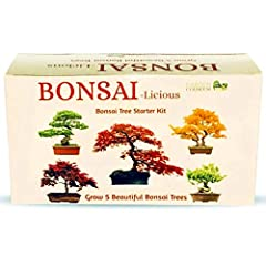 Idea Regalo - Kit per la Coltivazione di Un Albero Bonsai, mini kit di attrezzi per bonsai $ 7,99 incluso., con 5 Specie di Semi da Coltivare, Idea Regalo per Principianti