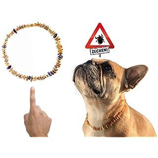 amberdog Bernsteinkette für Hund Amethyst Art.Nr.00516-L Größe 44cm Bernstein Halsband Original
