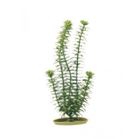 planta-anacharis-50-cm
