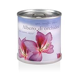 MacFlowers - Aprire, innaffiare, gioire! Da questa lattina crescera un - Albero di orchidea (Bauhinia purpurea). Oltre che un bel regalo, le piantine sono un ricordo di lunga durata che rende felice per mesi. I piccoli fiori sono un dolce omaggio ...