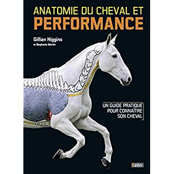 Anatomie du cheval et performance : Un guide pratique pour connaître son cheval