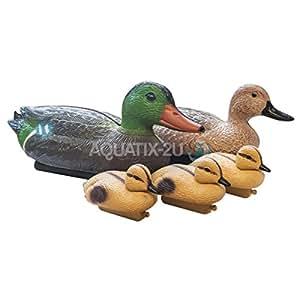 Famille de canard flottant de bassin Fonction