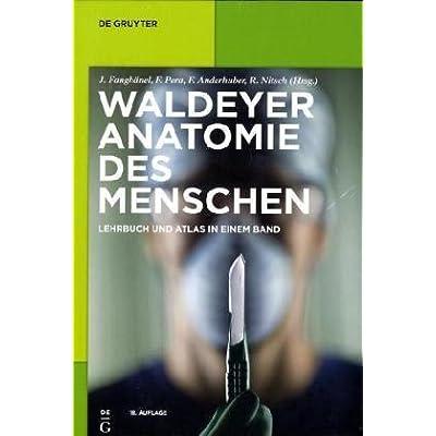 Download Waldeyer Anatomie Des Menschen PDF Free - DavidArlie