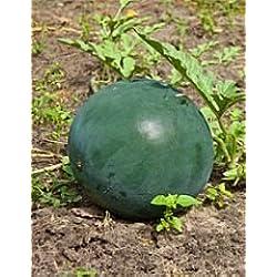Bobby-Seeds Melonensamen Bush Sugar Baby Wassermelone Portion
