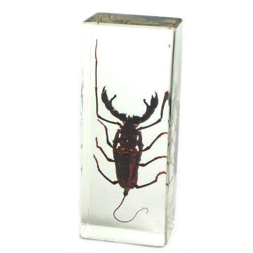 whip-scorpion-paperweight-44x16x11-