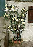 SwansGreen 100 Stück Rare Climbing Rose Blumensamen Efeu-Rebe Hängen 10 Schöne Staude Blumen Bonsai Garland Dekoration-Partei