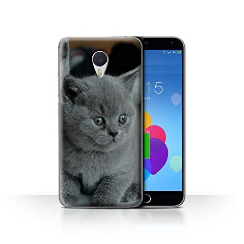 eSwish Hülle/Case für Meizu M3 Note/Graues Kätzchen Katze Muster/Süß Baby Tier Fotos Kollektion