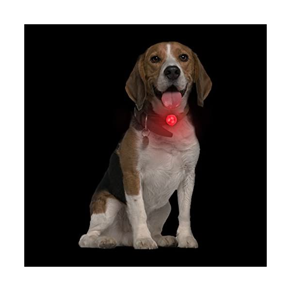 Top Munster Flashing SpotLit Cat / dog Collar Light,LED Pet Safety Light Luminous Pendant for Outdoor Safety (2 Pcs Red + Blue) 7