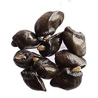Semillas de consuelda (70 unidades)