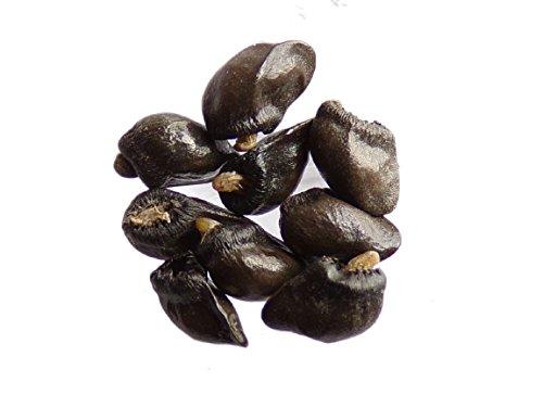 La Lettre S Shop: semillas de consuelda (Symphytum Officinale), 30 granos, abono ecológico