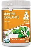 Verde Vivo 00770040 Rapid Polvere Ormone Radicante in Confezione