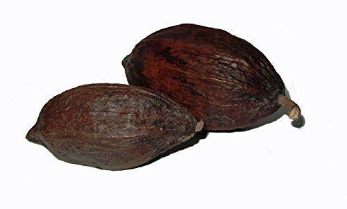 """CleanPrince 1 Stück echte Kakaoschote """"klein"""" Länge ca. 8-12 cm, Höhe ca. 5-8 cm, Kakaofrucht Kakaobohne Kakao, getrocknet, frisch getrocknet, Schokoladenbraun, braun, Deko, Dekofrüchte"""
