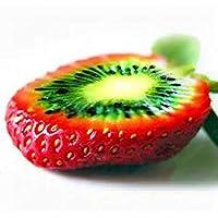 Keptei Samenhaus- Seltene Pfropfen Erdbeere Kiwi Samen Sweet Bio Obst Saatgut fuer Ihre Haus oder Balkon schoen und mehrfarbrig (50 Korn)
