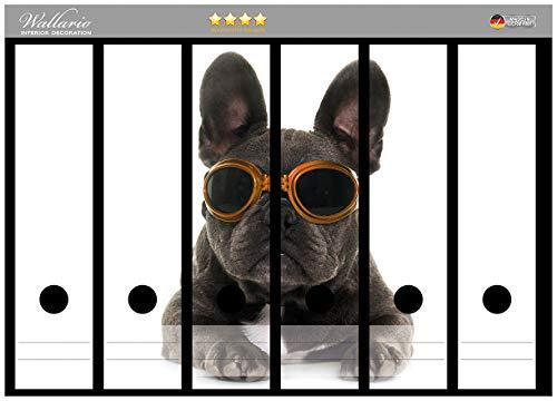Wallario Ordnerrücken Sticker Cooler Hund mit Sonnenbrille in orange - Französische Bulldogge in Premiumqualität - Größe 36 x 30 cm, passend für 6 breite Ordnerrücken