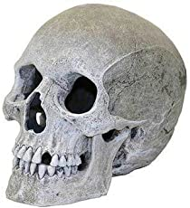 Top Quality Resin Ornament - Life - like Human Skull by TDPS