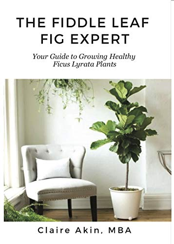 The Fiddle Leaf Fig Expert (book review) — The Houseplant & Urban on indoor wheat plant, indoor creeping fig, indoor tobacco plant, indoor oak plant, indoor willow plant, indoor pistachio plant, indoor avacado plant, indoor thyme plant, indoor holly plant, indoor berry plant, indoor cedar plant, indoor rosemary plant, indoor watermelon plant, indoor sage plant, indoor citrus plant, indoor pumpkin plant, indoor lilac plant, indoor garlic plant, indoor cocoa plant, indoor papaya plant,