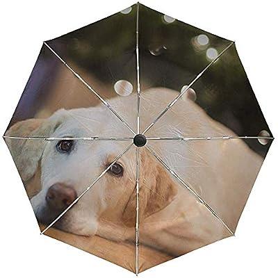 Paraguas automático Perro Labrador Mentira Cara Viaje Conveniente A Prueba de Viento Impermeable Plegable Automático Abrir Cerrar