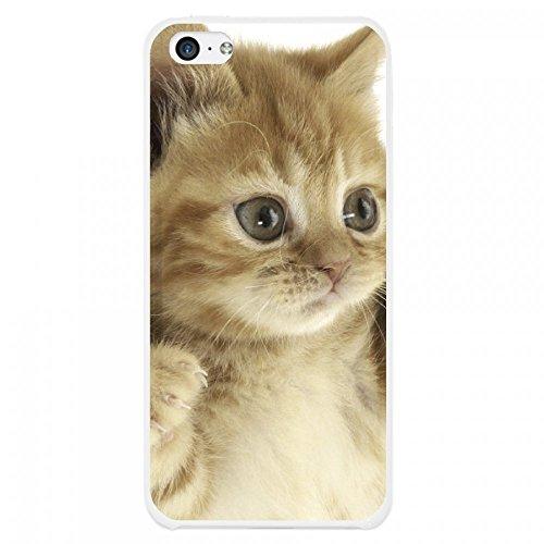 OnlineBestDigital - Animal Pattern Hardback Case / Housse pour Apple iPhone 5C - Tiger Kitty cat
