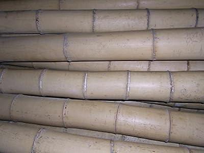 10 x Bambusrohr Bambusstange Bambushalm Bambus Bambusrohre 10 x 8-9 x 2 m / 80 - 90 mm von Bambus-Internethandel Leipzig auf Du und dein Garten