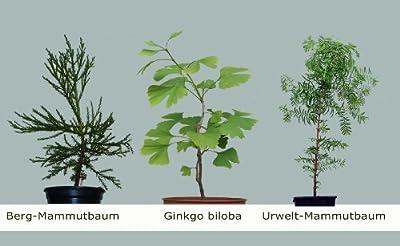Seedeo 3 Pflanzen aus der Zeit der Dinosaurier von Seedeo - Du und dein Garten