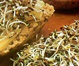 Premier Seeds Direct ALF01 40g Alfalfa Organic Sprouting Seeds