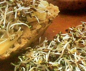 premier-seeds-direct-alf01-40g-alfalfa-organic-sprouting-seeds