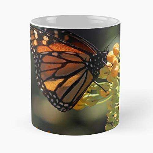 Monarch Butterfly Photography Photographer - Funny Gifts For Men And Women Gift Coffee Mug Tea Cup White-11 Oz.