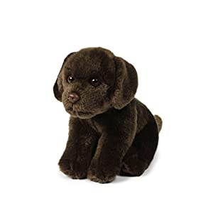 IBTT Anna Club Plush Chocolate Labrador de Peluche