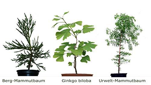 Seedeo 3 Pflanzen aus der Zeit der Dinosaurier