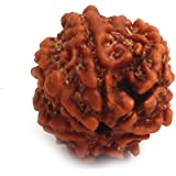Divine Mart 7 Mukhi | 7 FaceLab Certified Original Pure Rudraksha from Nepal(Beads)