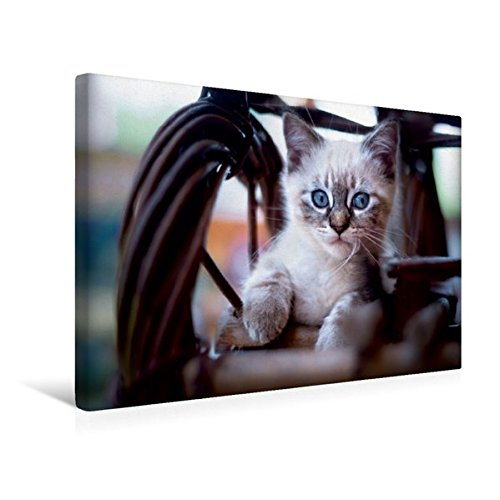 Premium Textil-Leinwand 45 cm x 30 cm quer, Lieblingsplatz | Wandbild, Bild auf Keilrahmen, Fertigbild auf echter Leinwand, Leinwanddruck (CALVENDO Tiere)