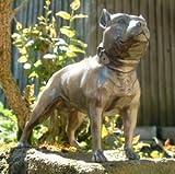 Stunning Pit Bull Pitbull/Staffie Terrier C/C Bronze Ornament/Model Dog 1600