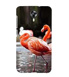 PrintVisa Cute Flamingo Couple 3D Hard Polycarbonate Designer Back Case Cover for Micromax Canvas Xpress 2 E313