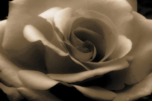 LARGE PAINTED SEPIA ROSE CANVAS ART PRINT FRAMED AND READY TO HANG 30 X 20 INCHES - Best Price