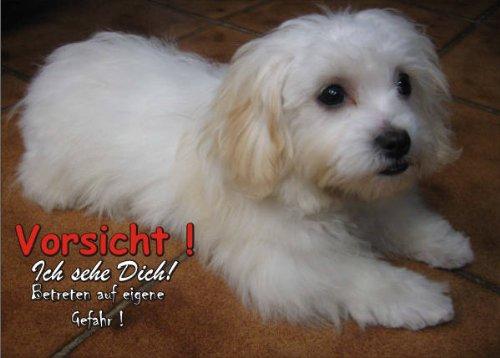 INDIGOS UG - Türschild FunSchild - SE604 DIN A5 ACHTUNG Hund Malteser - für Käfig, Zwinger, Haustier, Tür, Tier, Aquarium - aus hochwertigem Alu-Dibond beschriftet sehr stabil