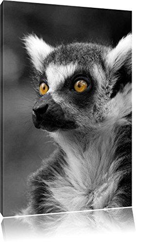 schöner Katta schwarz/weiß, Format: 70x100 auf hochkantiges Leinwand, XXL riesige Bilder fertig gerahmt mit Keilrahmen, Kunstdruck auf Wandbild mit Rahmen, günstiger als Gemälde oder Ölbild, kein Poster oder Plakat