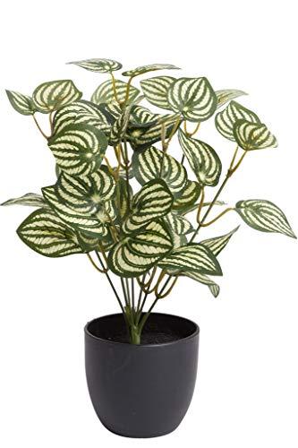 Flora-Seta GmbH Kunstpflanze (Alocasia, Dieffenbachia, Aglaonema, Zebrina, Calathea, Monstera) Höhe 20-30 cm im schwarzen Kunststofftopf (Zebrina)