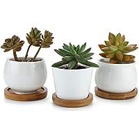 T4U 7cm Cerámico Colección Blanca NO.31 Suculento Maceta Cactus Flor Macetas Envase Plantas con