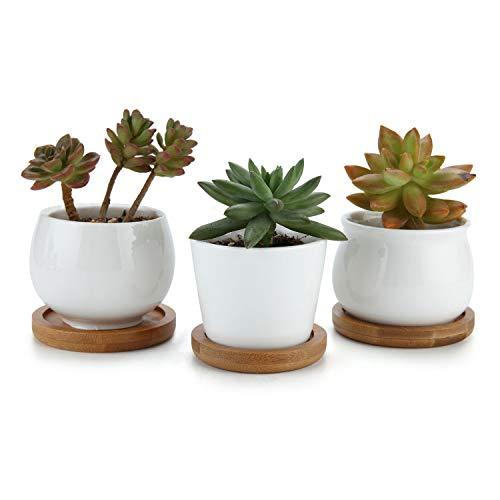 T4U 7cm Ceramica Bianca Collezione No.31 Succulento Vaso Cactus Vaso Vaso di Fiori Contenitore Piantatore con Vassoi di bambù, Confezione da 3