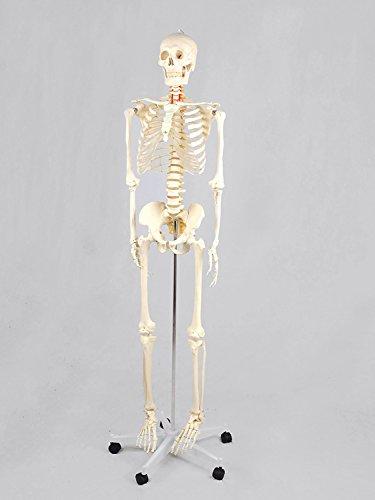 ensgroß 181cm inklusive Ständer auf Rollen, Haube ()